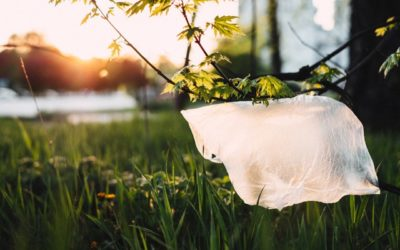 Episode 28 – Should we ban plastic bags?